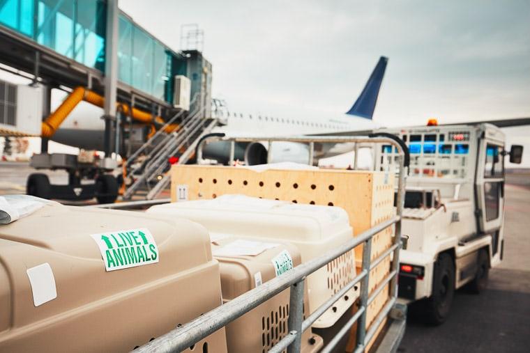Logistique Transport Animaux